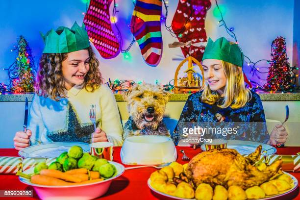 Christmas lunch with pet dog