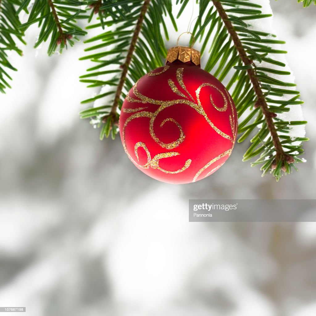 Christmas Ornament on Pine Tree : Stock Photo
