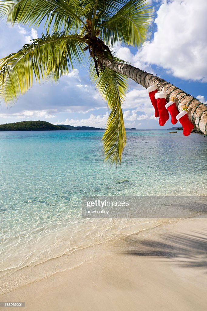 christmas palm tree on a caribbean beach stock photo - Christmas Palm Tree