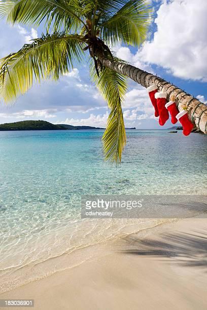 Christmas palm tree on a Caribbean beach