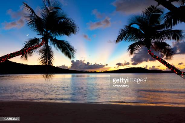 Christmas palm trees at sunset on a Caribbean beach