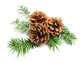 Christmas pine cones with branch on a white background. Decorate element
