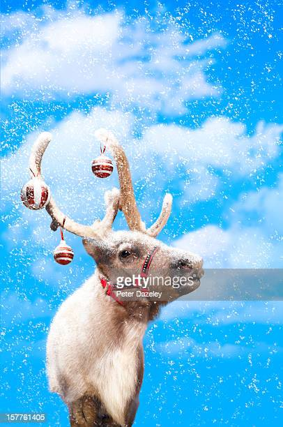 Christmas reindeer in snow