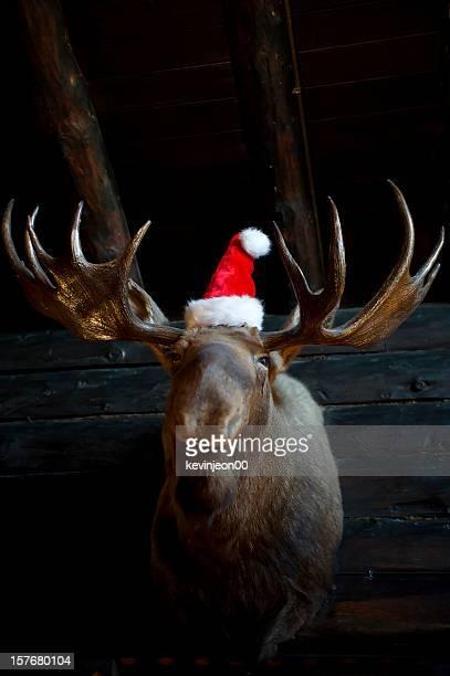 Noël renne avec Chapeau de Père Noël