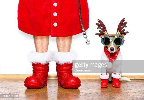 christmas santa claus dog : Foto de stock