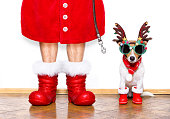 christmas  santa claus  jack russell dog isolated on white background with reindeer  hat and red boots for the holidays waiting and sitting to go for a walk with leash