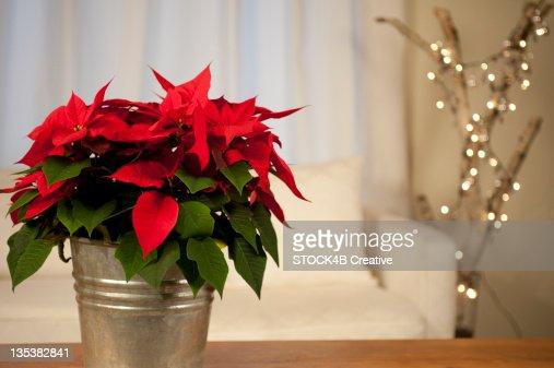 Christmas Star on table