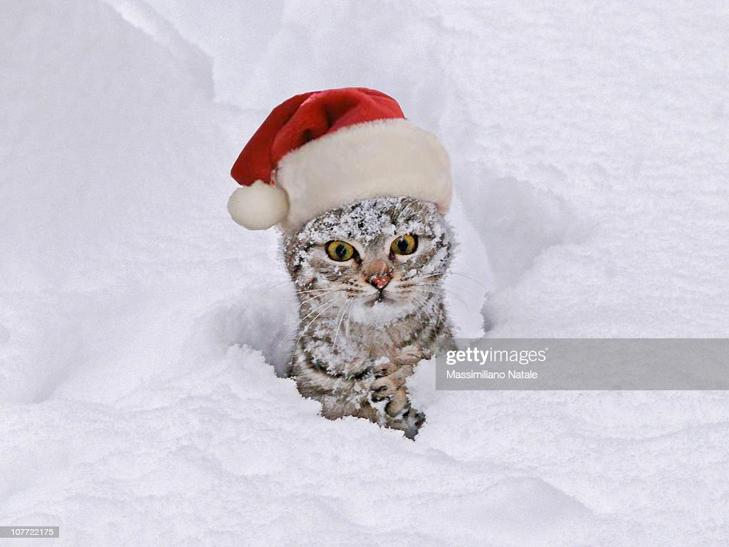 Kitten in snow with santa hat.