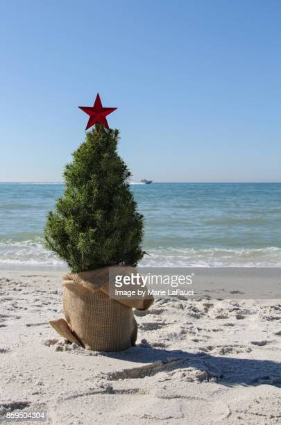 Christmas tree at the beach