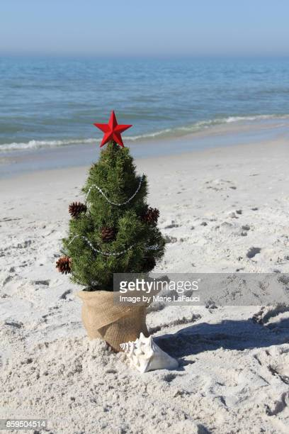 Christmas tree at the beach with large seashell