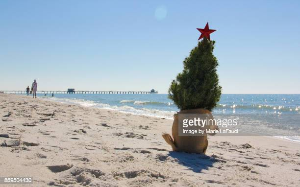 Christmas tree at the beach with pier in background