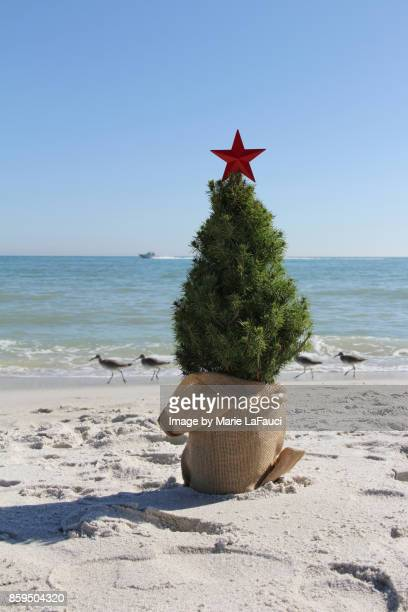 Christmas tree at the beach with shore birds walking by