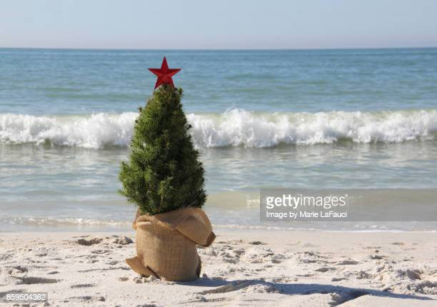 Christmas tree at the beach with waves crashing
