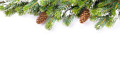Christmas tree branch with snow and pine cones. Isolated on white background with copy space