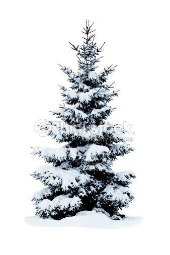 weihnachtsbaum mit schnee bedeckt isoliert auf wei em. Black Bedroom Furniture Sets. Home Design Ideas