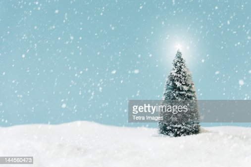 Christmas tree covering by snow, studio shot