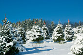 Christmas Tree Farm after a snow fallClick banner below for similar images: