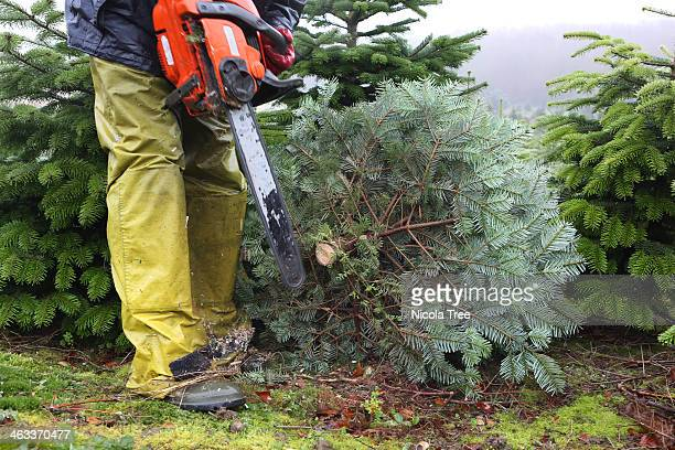 Christmas Tree Farm Stock Photos and Pictures   Getty Images