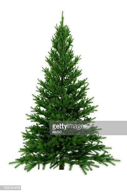 Christmas Tree Isolated on White Background (XXXL)