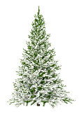Christmas Tree Isolated on White with Snow (XXXL)
