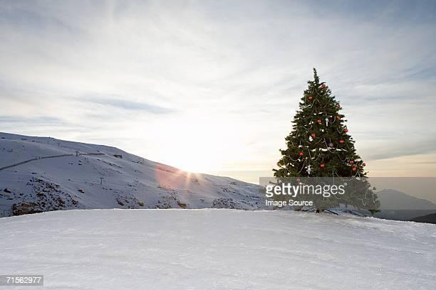 Christmas tree on a mountain