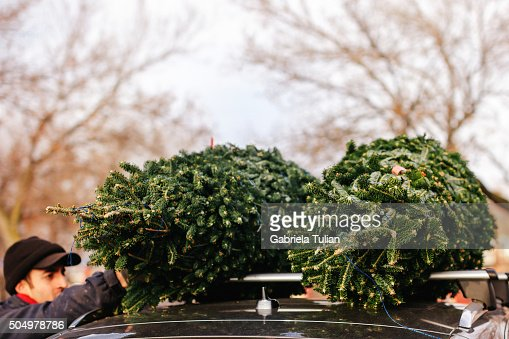 Christmas Tree On Car Roof Stock Photo Getty Images - Christmas Tree On Car
