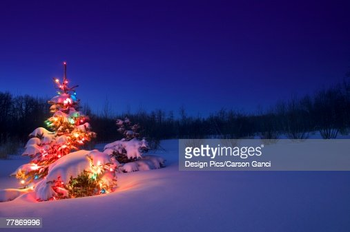 christmas tree outdoors glowing at night covered in snow stock photo getty images - Snow Covered Christmas Trees