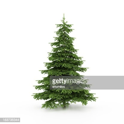 Christmas Tree : Stock Photo