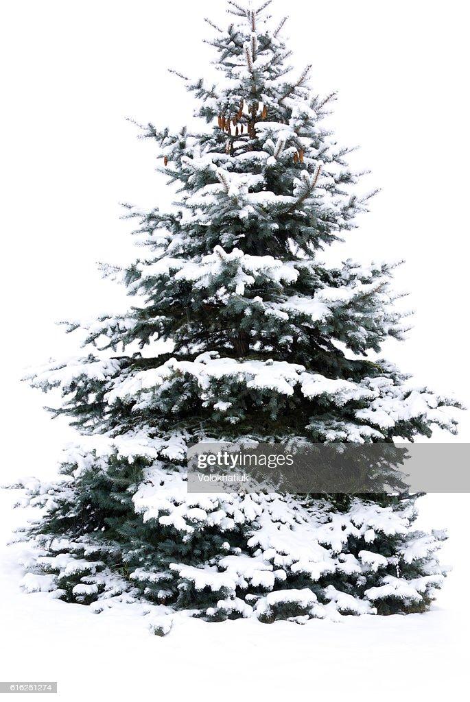Árbol de navidad  : Foto de stock