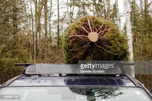 Christmas Tree Tied To Roof Of Car Stock Photo Getty Images - Christmas Tree On Car