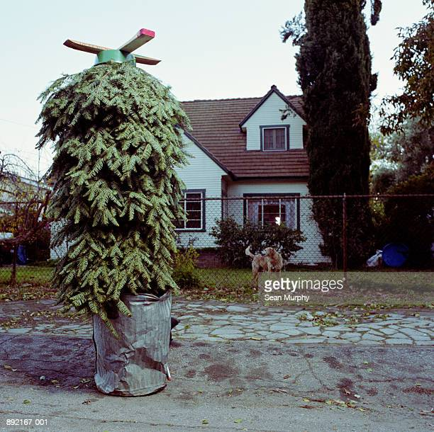 Christmas tree upside down in trash can in front of house