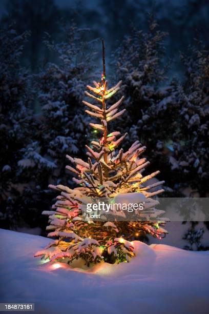 Christmas tree with fresh and fluffy snow