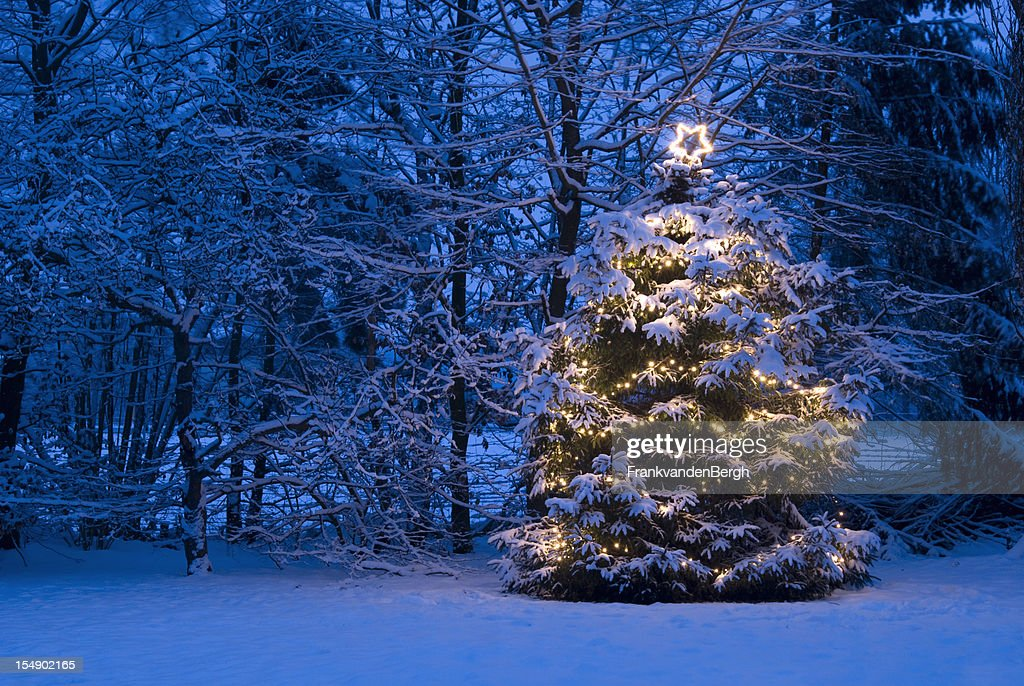 christmas tree with lights in the snow stock photo - Christmas Trees With Lights