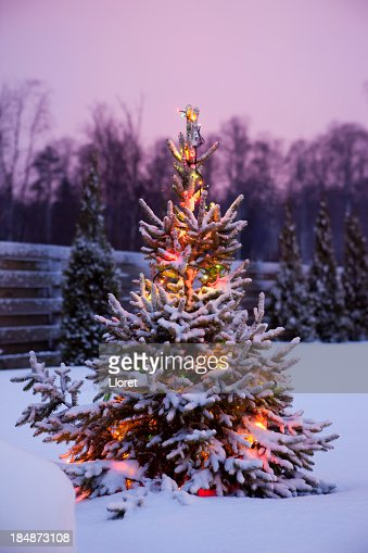 Winter garden scene stock photos and pictures getty images