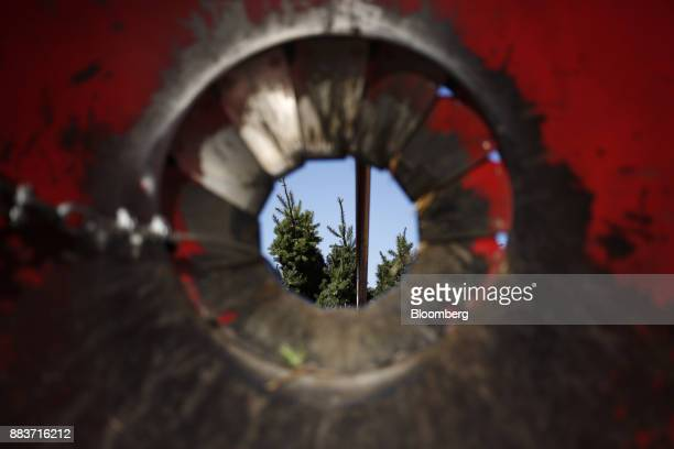 Christmas trees are seen through a baler at Brown's Tree Farm in Muncy Pennsylvania US on Wednesday Nov 29 2017 People looking for Christmas trees...