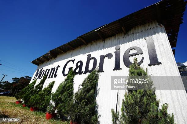 Christmas trees for sale at Mount Gabriel farm on December 4 2017 in Auckland New Zealand Mount Gabriel Christmas Tree Farm allows people to choose...