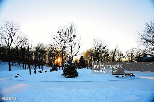 Christmas Trees On Snow Covered Landscape