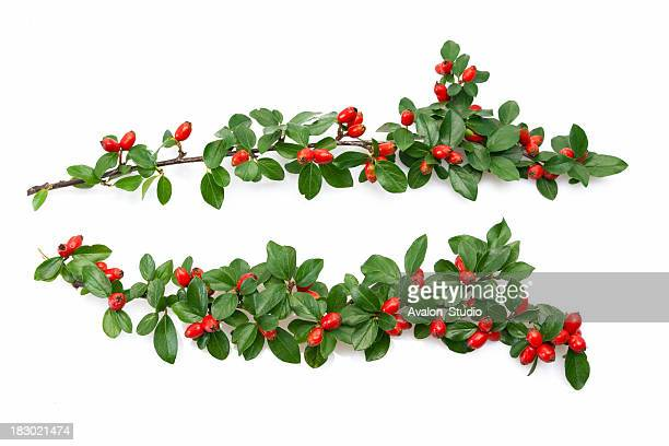 Christmass twig