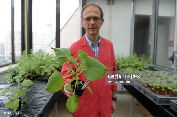 Christophe Ritzenthaler researcher at the plant molecular biology institute of the French National Center for Scientific Research in Strasbourg...