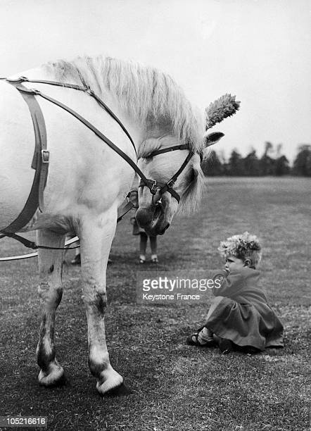 Christopher Sprickland And Samson The Pony In Aldershot In 1955