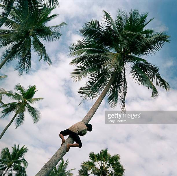 Chuat collects coconuts from the trees hanging over his family's home on Rabbit Island just off the coast from Kep The small coastal town of Kep is...