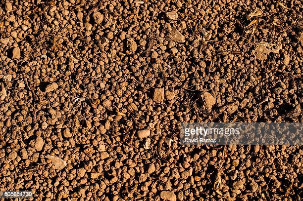 'Chufas' with sand wait to be washed after being harvested on January 18 2016 in Valencia Spain According to the Valencia's Tiger Nut Regulatory...