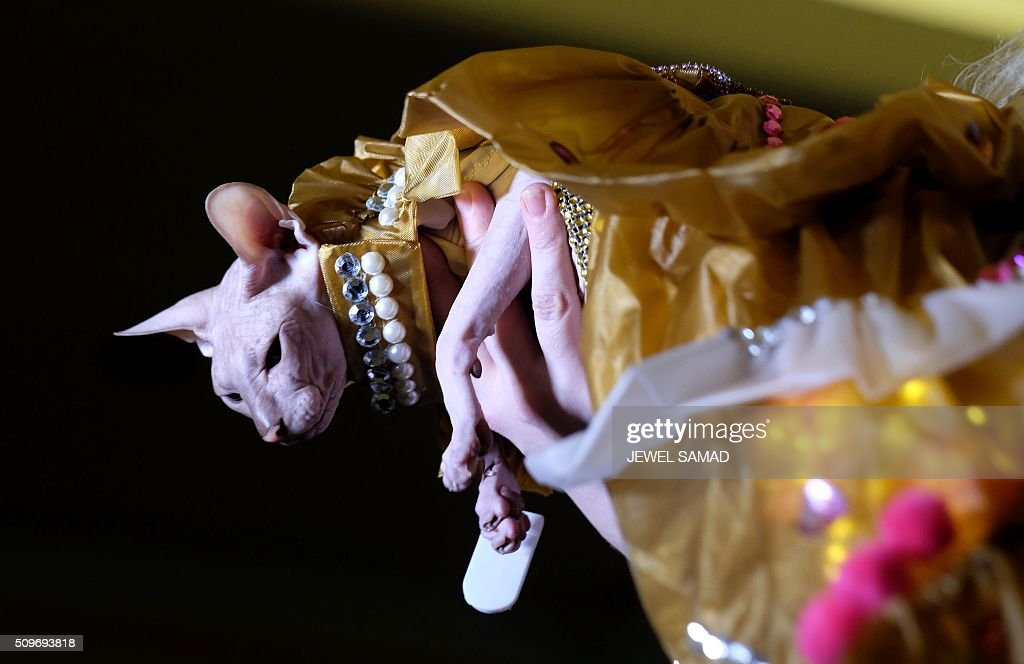 A chulala is carried on the ramp to present an outfit during the Pet Fashion Show in New York on February 11, 2016. / AFP / Jewel Samad