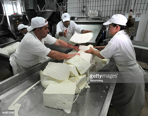 Chunks of curd are put into a shredder before being made into mozzarella di bufala or buffalo mozzarella at the Baronia factory near Caserta north of...