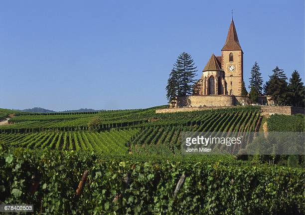 Church and Vineyards, Hunawihr, Alsace, France