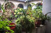 Church cloister full of plants