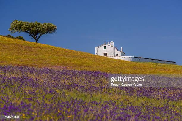 Church, Cork Tree, Wildflowers in Portugal