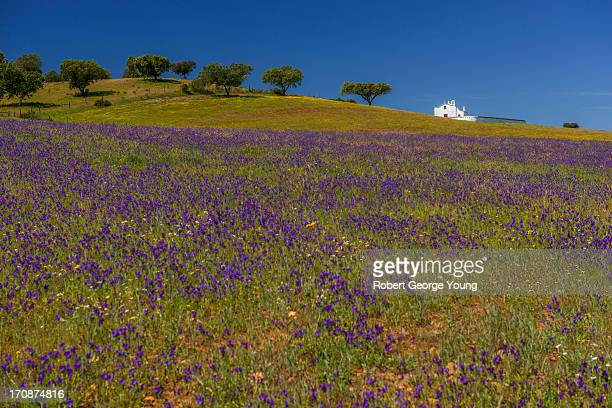 Church, Cork Trees, Wildflowers in Portugal