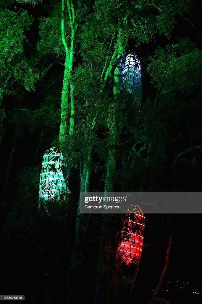Cicada light sculptures are displayed in a tree during a media preview of Vivid Sydney illuminated displays at Taronga Zoo on May 24, 2016 in Sydney, Australia. Vivid is lighting up at Taronga Zoo for the first time with ten giant animal sculptures representing critical species the zoo is committed to protecting. Held annually, Vivid Sydney is the world's largest festival of light, music and ideas running for 23 days.