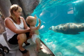 Cici Schultz and her son Derek Schultz 9months of Arlington Virginia watch a sea lion as it swims by a viewing area during a sneak peak at the new...